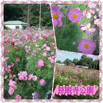 PhotoFancie2013_10_16_22_20_44.jpg